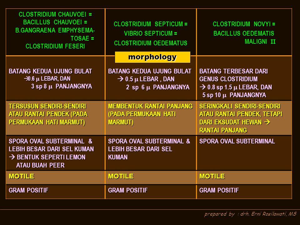 CLOSTRIDIUM CHAUVOEI = BACILLUS CHAUVOEI = B.GANGRAENA EMPHYSEMA- TOSAE = TOSAE = CLOSTRIDIUM FESERI CLOSTRIDIUM SEPTICUM = VIBRIO SEPTICUM = CLOSTRID