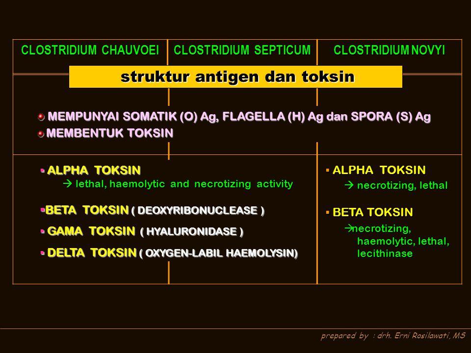 prepared by : drh. Erni Rosilawati, MS MEMPUNYAI SOMATIK (O) Ag, FLAGELLA (H) Ag dan SPORA (S) Ag MEMPUNYAI SOMATIK (O) Ag, FLAGELLA (H) Ag dan SPORA