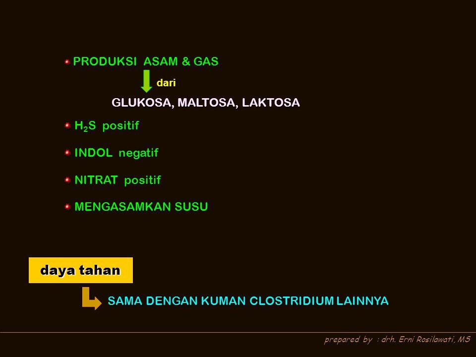 prepared by : drh. Erni Rosilawati, MS PRODUKSI ASAM & GAS PRODUKSI ASAM & GAS H 2 S positif H 2 S positif INDOL negatif INDOL negatif NITRAT positif