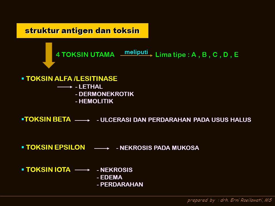 prepared by : drh. Erni Rosilawati, MS struktur antigen dan toksin 4 TOKSIN UTAMA meliputi Lima tipe : A, B, C, D, E  TOKSIN ALFA /LESITINASE  TOKSI