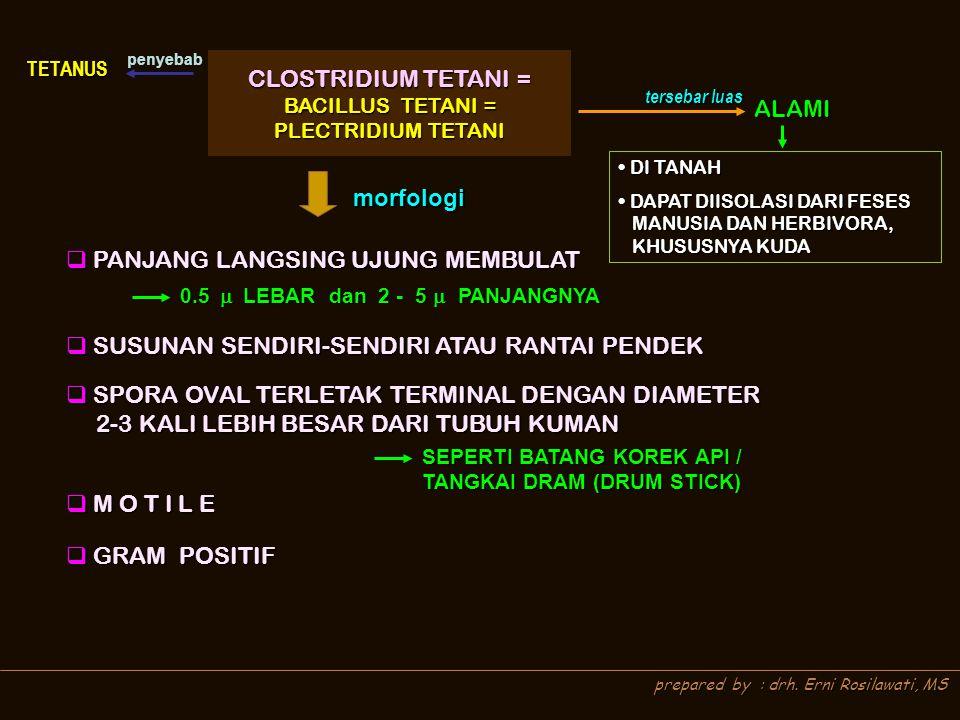 prepared by : drh. Erni Rosilawati, MS CLOSTRIDIUM TETANI = CLOSTRIDIUM TETANI = BACILLUS TETANI = BACILLUS TETANI = PLECTRIDIUM TETANI PLECTRIDIUM TE