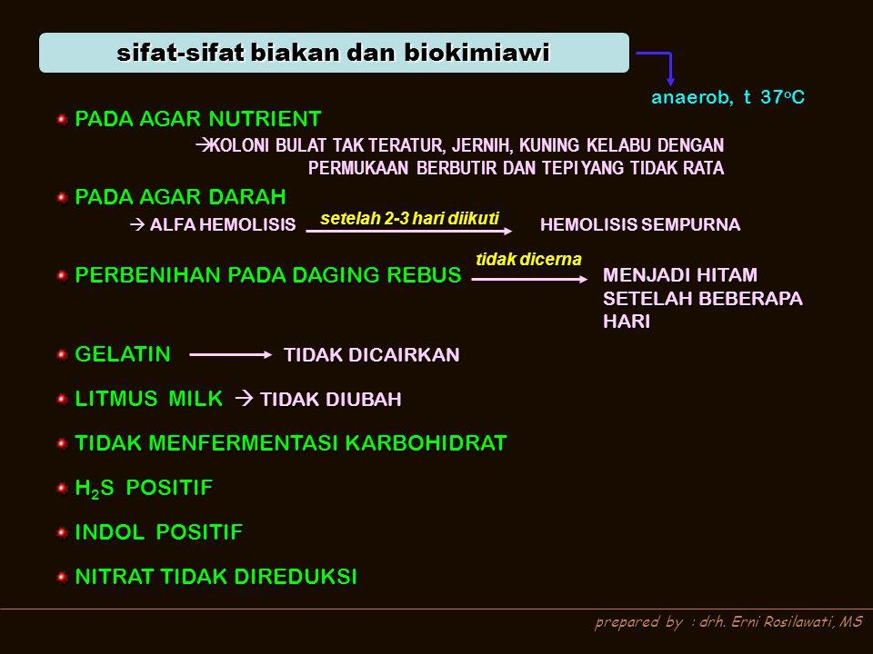 prepared by : drh. Erni Rosilawati, MS sifat-sifat biakan dan biokimiawi anaerob, t 37 o C PADA AGAR NUTRIENT PADA AGAR NUTRIENT PADA AGAR DARAH PADA