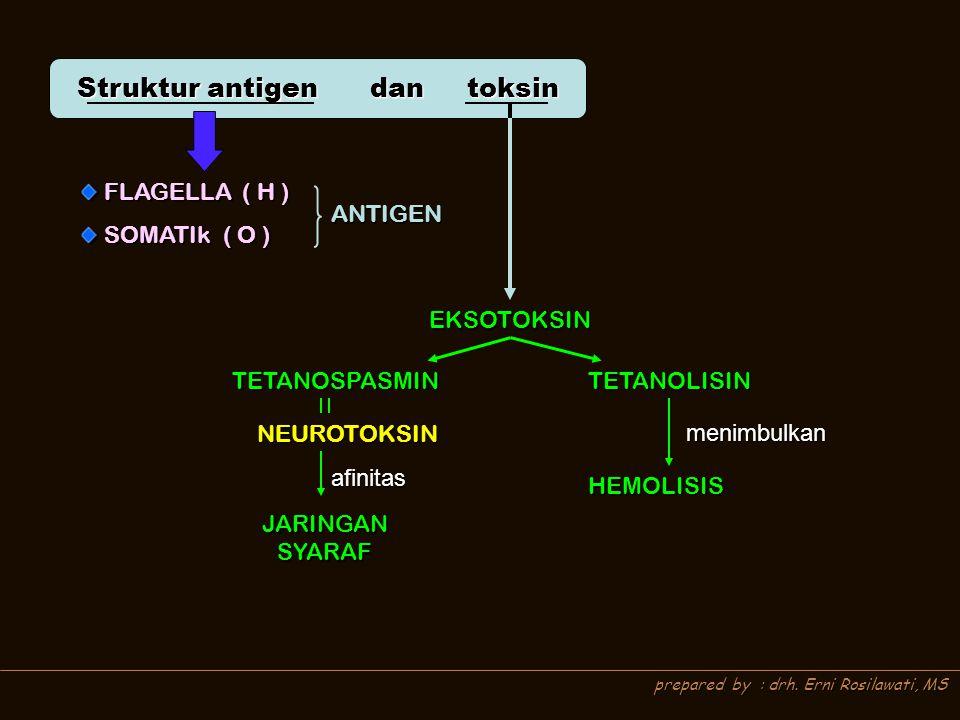 prepared by : drh. Erni Rosilawati, MS Struktur antigen dan toksin FLAGELLA ( H ) FLAGELLA ( H ) SOMATIk ( O ) SOMATIk ( O ) ANTIGEN EKSOTOKSIN TETANO