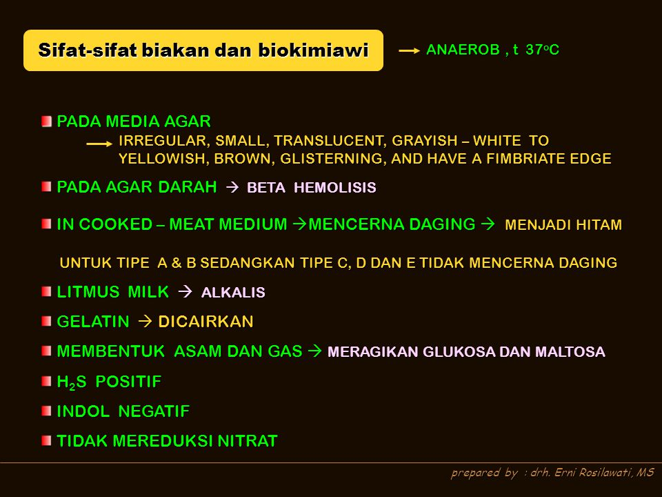 prepared by : drh. Erni Rosilawati, MS Sifat-sifat biakan dan biokimiawi ANAEROB, t 37 o C PADA MEDIA AGAR PADA MEDIA AGAR PADA AGAR DARAH  BETA HEMO