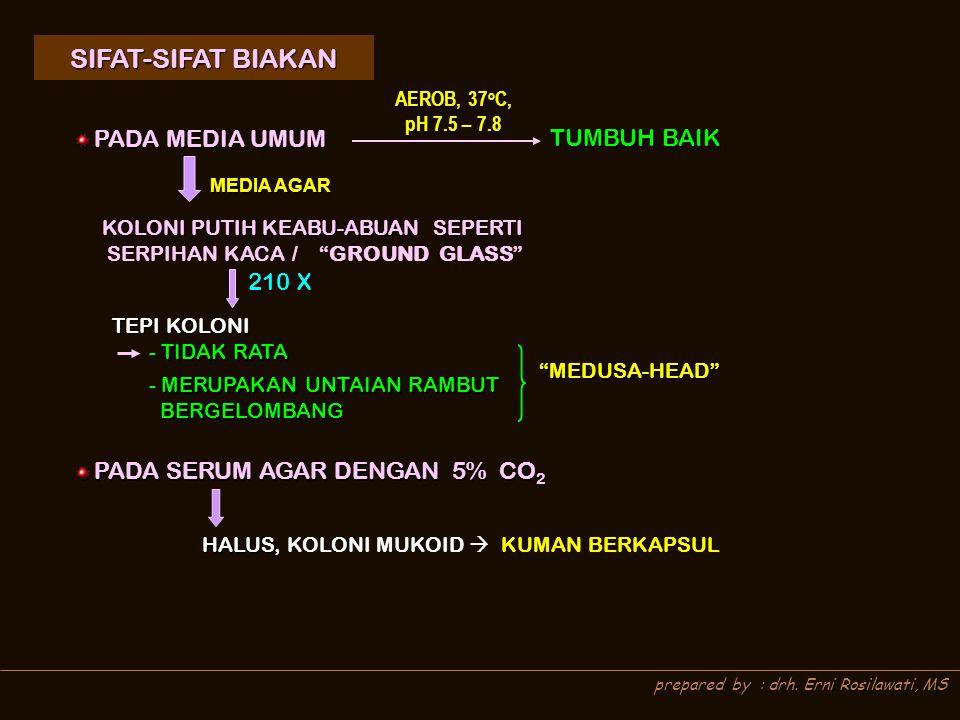 prepared by : drh. Erni Rosilawati, MS SIFAT-SIFAT BIAKAN SIFAT-SIFAT BIAKAN PADA MEDIA UMUM PADA MEDIA UMUM TUMBUH BAIK AEROB, 37 o C, pH 7.5 – 7.8 M