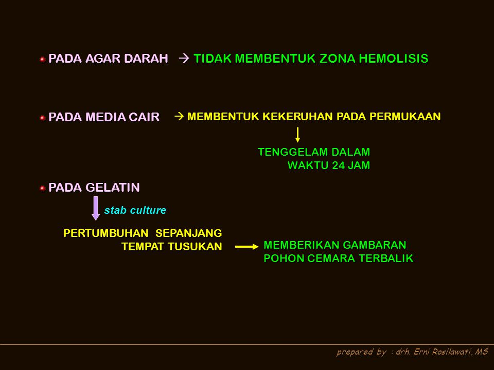 prepared by : drh. Erni Rosilawati, MS PADA AGAR DARAH  TIDAK MEMBENTUK ZONA HEMOLISIS PADA AGAR DARAH  TIDAK MEMBENTUK ZONA HEMOLISIS PADA MEDIA CA