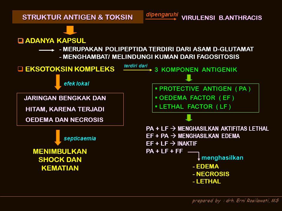 prepared by : drh. Erni Rosilawati, MS STRUKTUR ANTIGEN & TOKSIN STRUKTUR ANTIGEN & TOKSINdipengaruhi VIRULENSI B.ANTHRACIS  ADANYA KAPSUL  EKSOTOKS