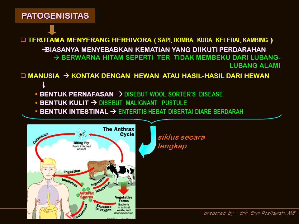 prepared by : drh. Erni Rosilawati, MS PATOGENISITAS  TERUTAMA MENYERANG HERBIVORA ( SAPI, DOMBA, KUDA, KELEDAI, KAMBING )  MANUSIA  KONTAK DENGAN