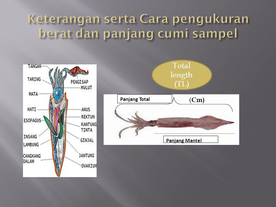 Total length (TL) ( Cm) Panjang Mantel Panjang Total