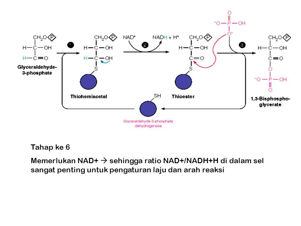 Tahap ke 6 Memerlukan NAD+  sehingga ratio NAD+/NADH+H di dalam sel sangat penting untuk pengaturan laju dan arah reaksi