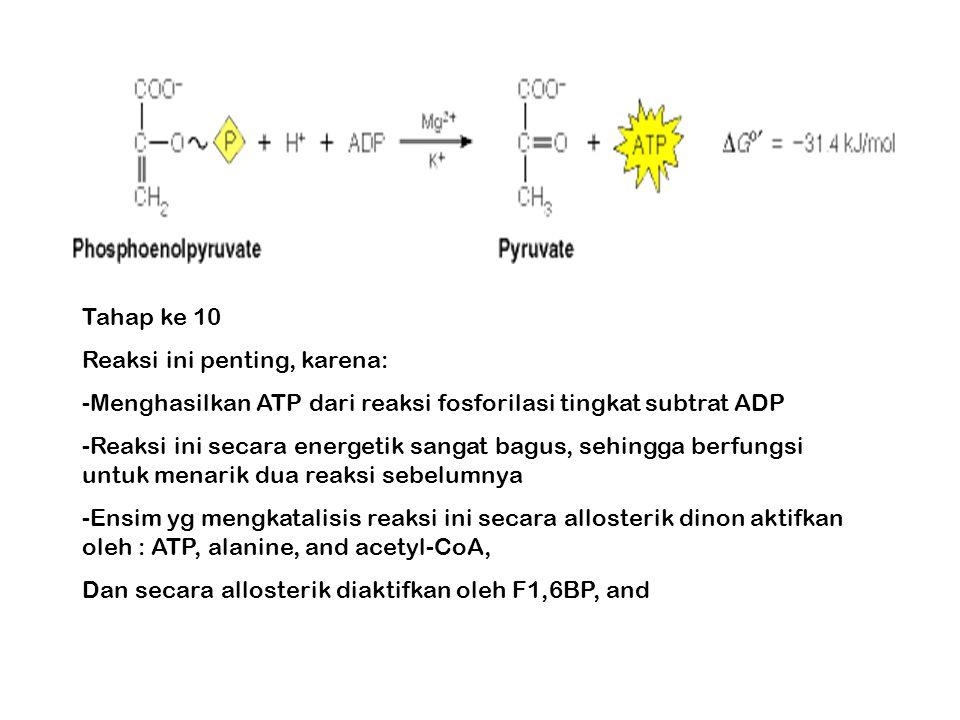 Tahap ke 10 Reaksi ini penting, karena: -Menghasilkan ATP dari reaksi fosforilasi tingkat subtrat ADP -Reaksi ini secara energetik sangat bagus, sehingga berfungsi untuk menarik dua reaksi sebelumnya -Ensim yg mengkatalisis reaksi ini secara allosterik dinon aktifkan oleh : ATP, alanine, and acetyl-CoA, Dan secara allosterik diaktifkan oleh F1,6BP, and