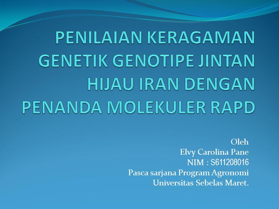 Oleh Elvy Carolina Pane NIM : S611208016 Pasca sarjana Program Agronomi Universitas Sebelas Maret.