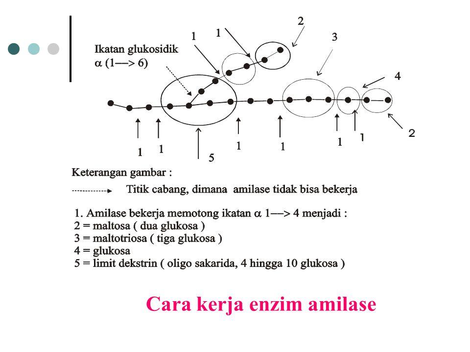 Cara kerja enzim amilase