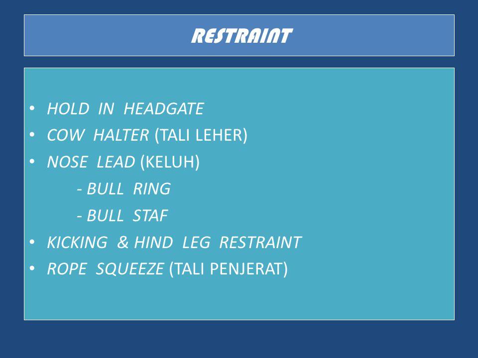 RESTRAINT HOLD IN HEADGATE COW HALTER (TALI LEHER) NOSE LEAD (KELUH) - BULL RING - BULL STAF KICKING & HIND LEG RESTRAINT ROPE SQUEEZE (TALI PENJERAT)