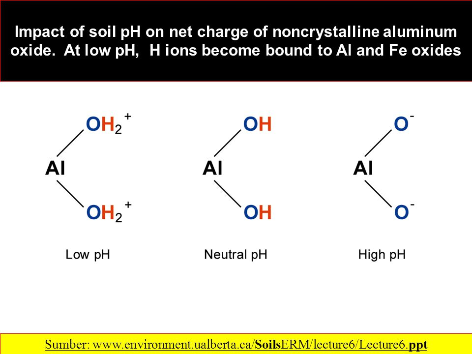 Impact of soil pH on net charge of noncrystalline aluminum oxide.