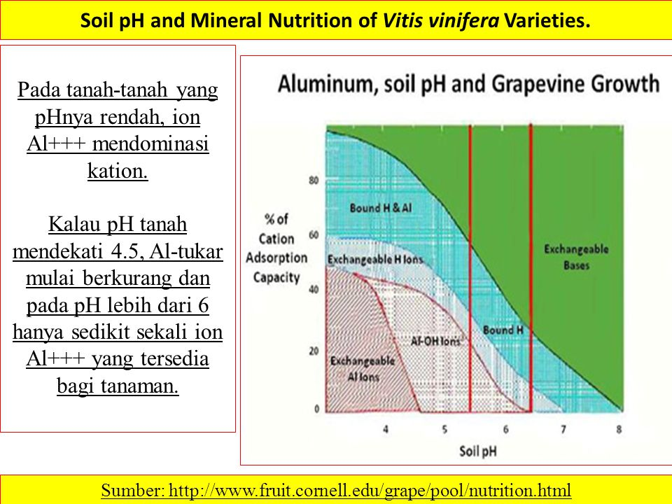 Soil pH and Mineral Nutrition of Vitis vinifera Varieties. Sumber: http://www.fruit.cornell.edu/grape/pool/nutrition.html Pada tanah-tanah yang pHnya