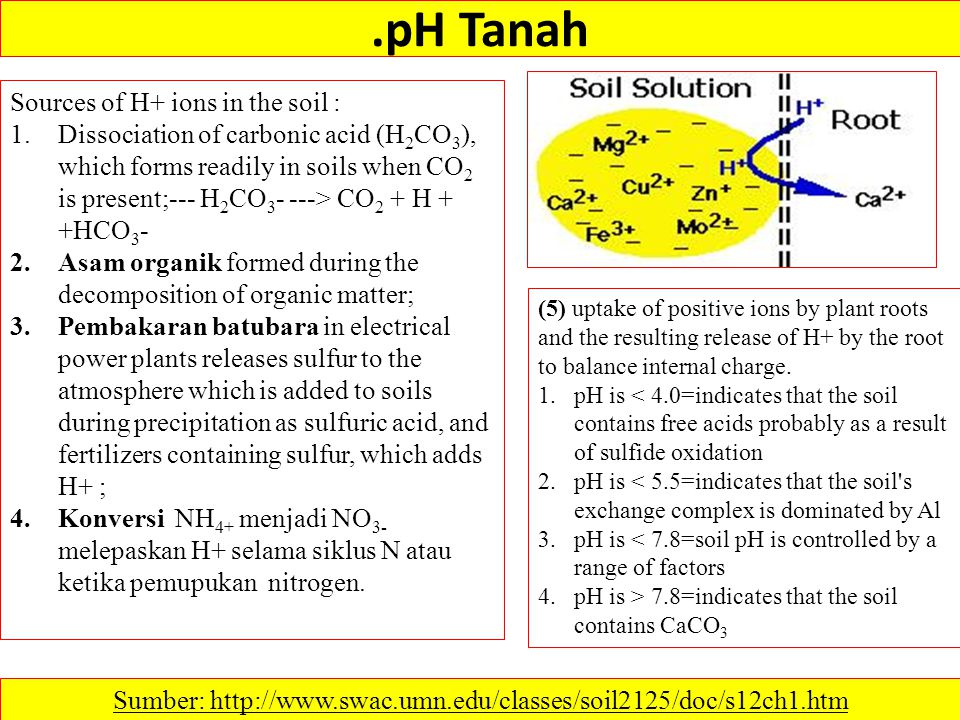 .pH Tanah Sumber: http://www.swac.umn.edu/classes/soil2125/doc/s12ch1.htm (5) uptake of positive ions by plant roots and the resulting release of H+ b