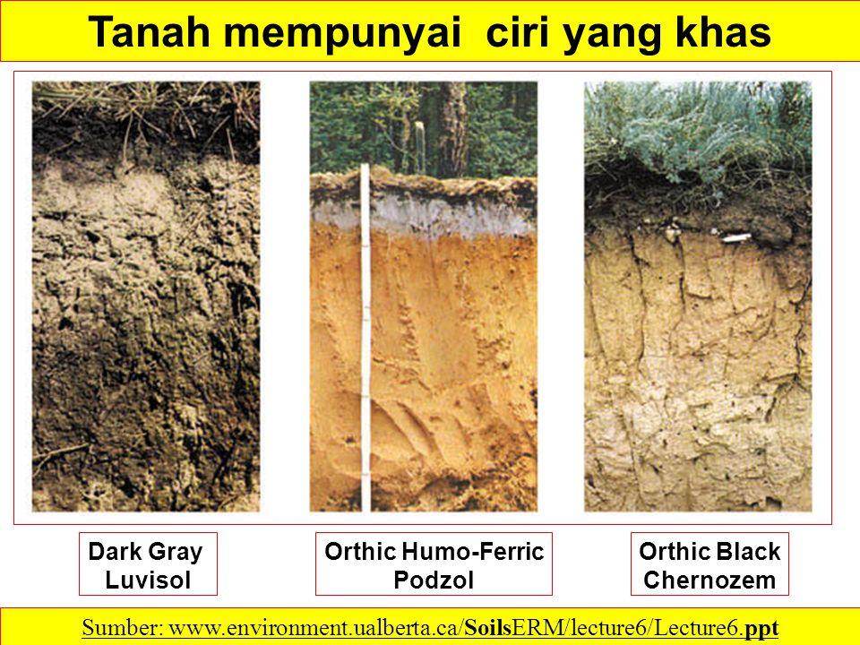 .pH Tanah Sumber: http://www.swac.umn.edu/classes/soil2125/doc/s12ch1.htm Tanah-tanah cenderung menjadi lebih masam karena: 1.Air Hujan mencuci kation basa (calcium, magnesium, potassium dan sodium); 2.CO2 dari dekomposisi BOT dan respirasi akar yang larut dalam air- tanah membentuk larutan asam lemah; 3.Penyerapan kation by plant roots and the resulting release of H+ by the root to balance internal charge; 4.Pembentukan asam kuat organik dan anorganik, such as nitric and sulfuric acid, from decaying organic matter and oxidation of ammonium and sulfur fertilizers.