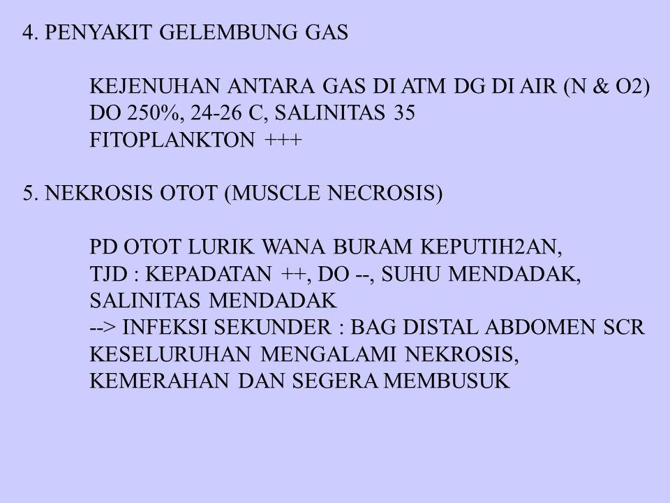 4. PENYAKIT GELEMBUNG GAS KEJENUHAN ANTARA GAS DI ATM DG DI AIR (N & O2) DO 250%, 24-26 C, SALINITAS 35 FITOPLANKTON +++ 5. NEKROSIS OTOT (MUSCLE NECR