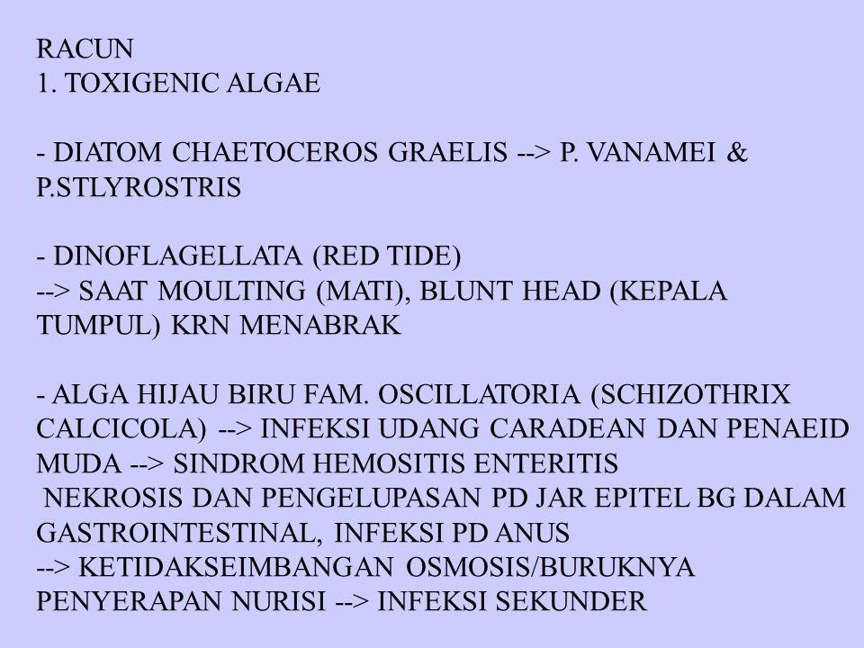 RACUN 1. TOXIGENIC ALGAE - DIATOM CHAETOCEROS GRAELIS --> P. VANAMEI & P.STLYROSTRIS - DINOFLAGELLATA (RED TIDE) --> SAAT MOULTING (MATI), BLUNT HEAD