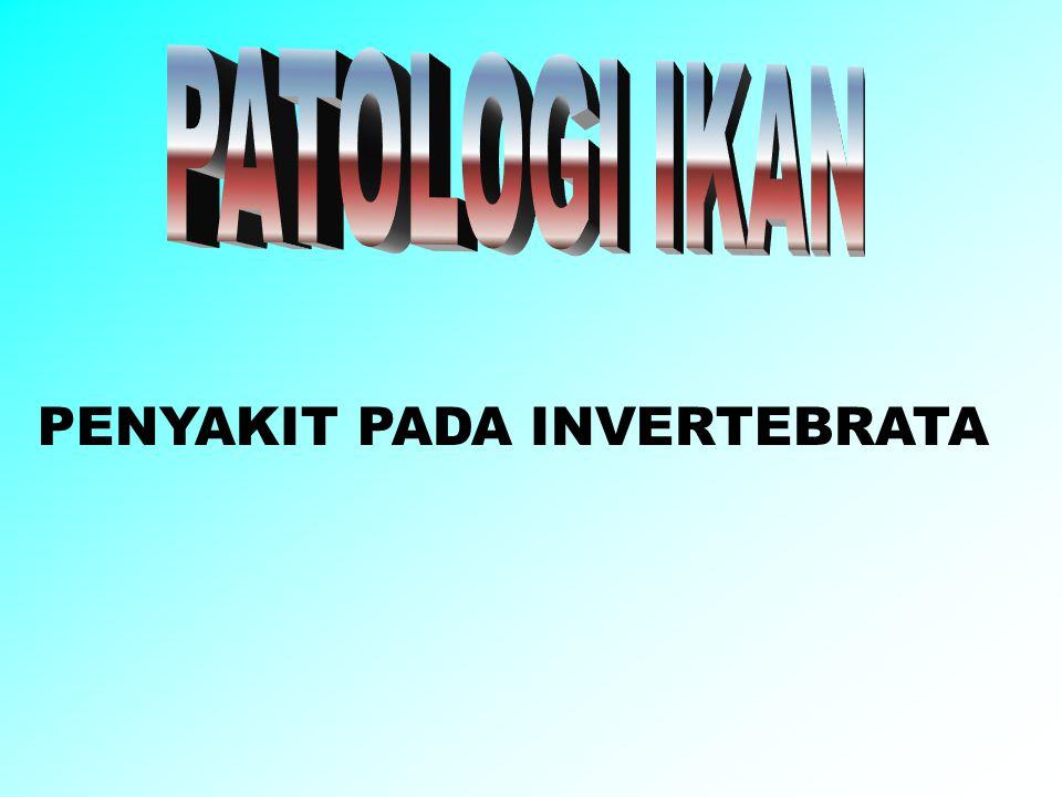 PENYAKIT PADA INVERTEBRATA
