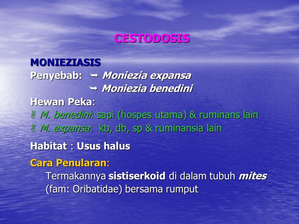 CESTODOSIS MONIEZIASIS Penyebab:  Moniezia expansa  Moniezia benedini  Moniezia benedini Hewan Peka:  M.