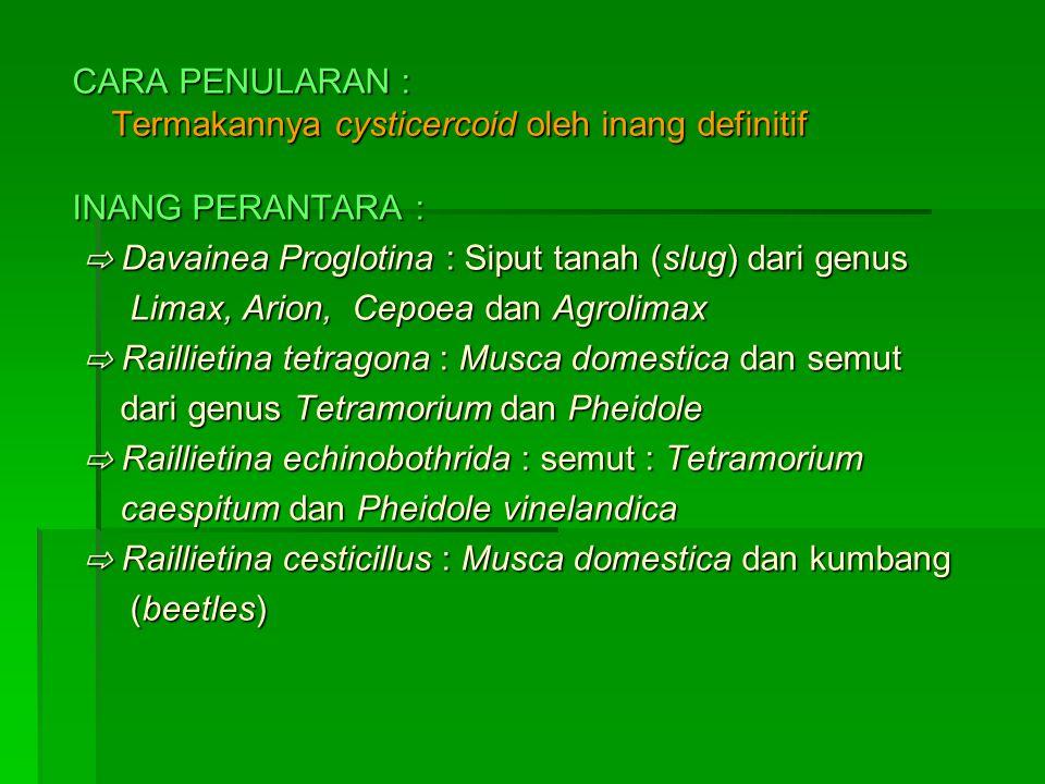 CARA PENULARAN : Termakannya cysticercoid oleh inang definitif INANG PERANTARA : ⇨ Davainea Proglotina : Siput tanah (slug) dari genus ⇨ Davainea Proglotina : Siput tanah (slug) dari genus Limax, Arion, Cepoea dan Agrolimax Limax, Arion, Cepoea dan Agrolimax ⇨ Raillietina tetragona : Musca domestica dan semut ⇨ Raillietina tetragona : Musca domestica dan semut dari genus Tetramorium dan Pheidole dari genus Tetramorium dan Pheidole ⇨ Raillietina echinobothrida : semut : Tetramorium ⇨ Raillietina echinobothrida : semut : Tetramorium caespitum dan Pheidole vinelandica caespitum dan Pheidole vinelandica ⇨ Raillietina cesticillus : Musca domestica dan kumbang ⇨ Raillietina cesticillus : Musca domestica dan kumbang (beetles) (beetles)