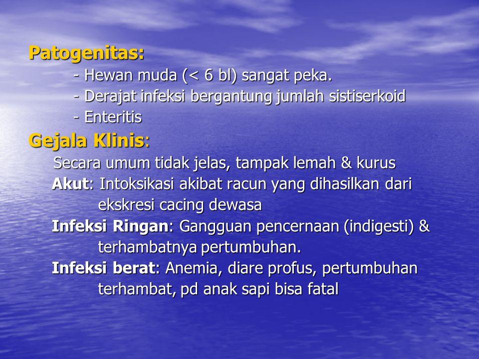 DIAGNOSIS : ⇨ Gejala klinis & ditemukan sejumlah besar segmen cacing pita ⇨ Pemriks.