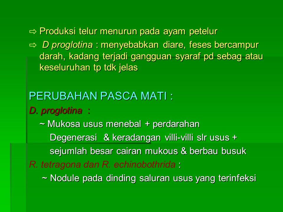 Produksi telur menurun pada ayam petelur ⇨ Produksi telur menurun pada ayam petelur D proglotina : menyebabkan diare, feses bercampur darah, kadang terjadi gangguan syaraf pd sebag atau keseluruhan tp tdk jelas ⇨ D proglotina : menyebabkan diare, feses bercampur darah, kadang terjadi gangguan syaraf pd sebag atau keseluruhan tp tdk jelas PERUBAHAN PASCA MATI : D.
