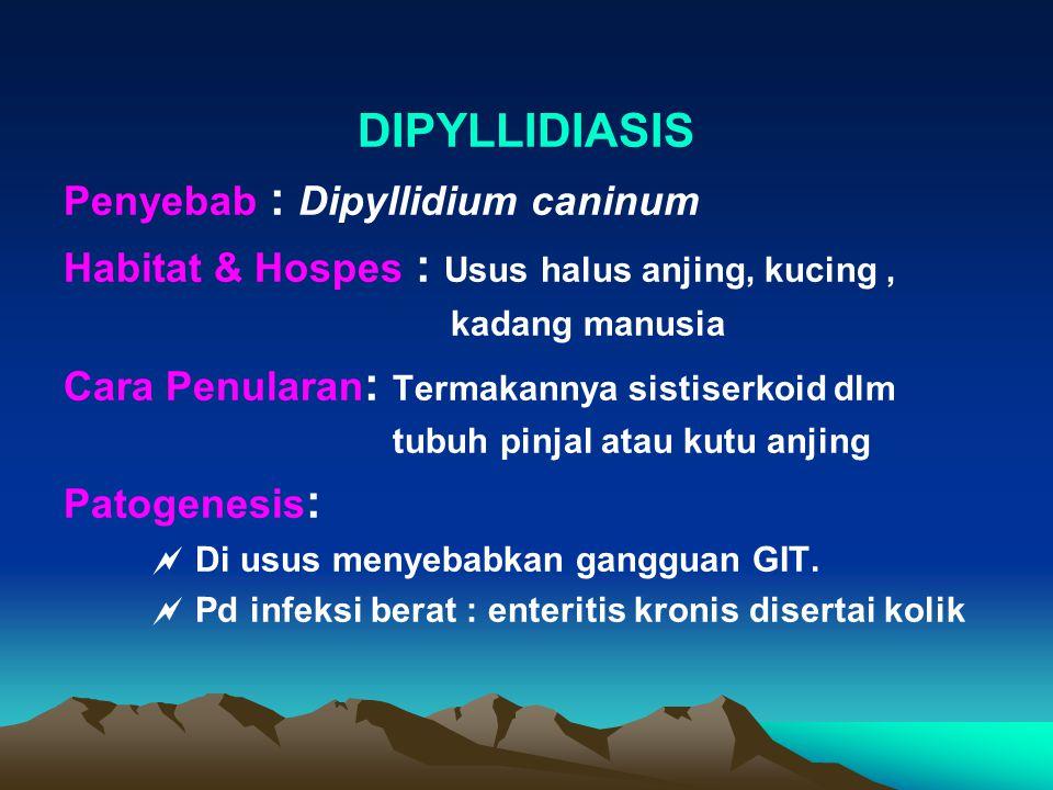 DIPYLLIDIASIS Penyebab : Dipyllidium caninum Habitat & Hospes : Usus halus anjing, kucing, kadang manusia Cara Penularan : Termakannya sistiserkoid dlm tubuh pinjal atau kutu anjing Patogenesis :  Di usus menyebabkan gangguan GIT.