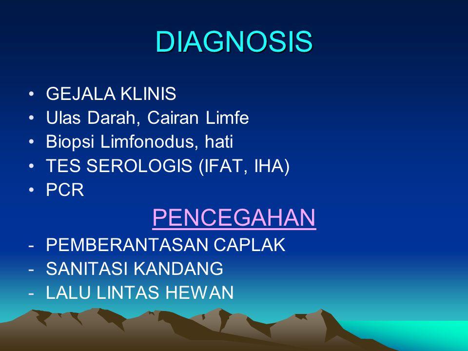 DIAGNOSIS GEJALA KLINIS Ulas Darah, Cairan Limfe Biopsi Limfonodus, hati TES SEROLOGIS (IFAT, IHA) PCR PENCEGAHAN -PEMBERANTASAN CAPLAK -SANITASI KAND