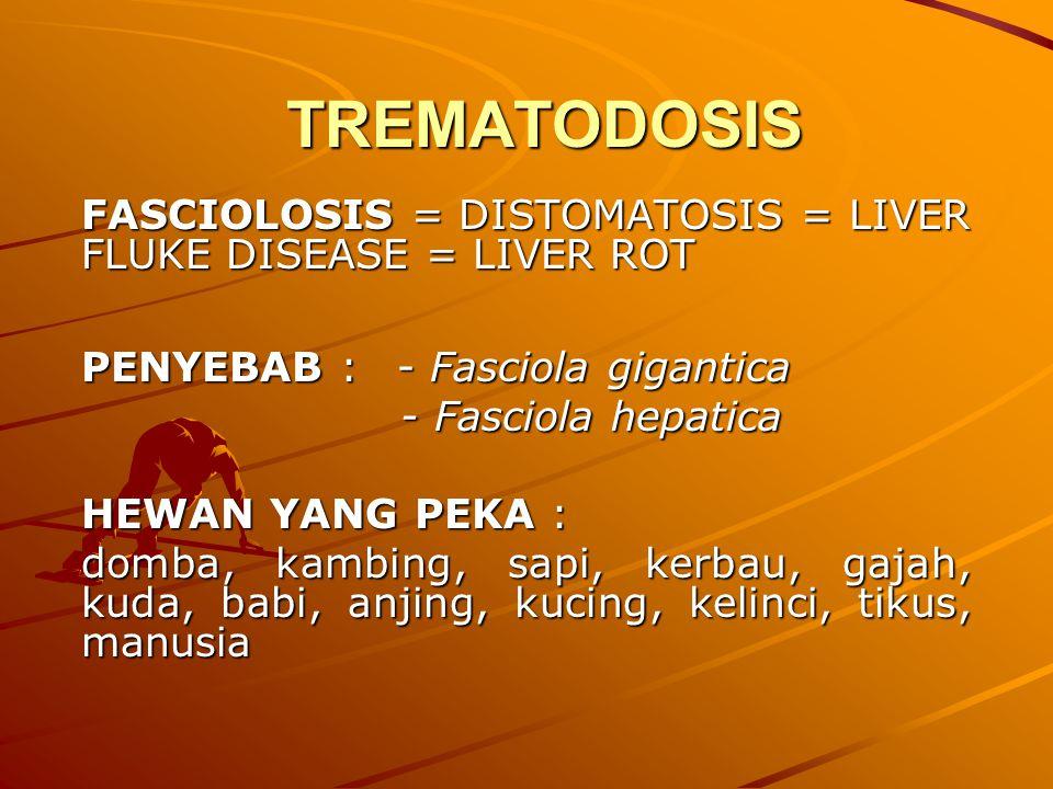 TREMATODOSIS FASCIOLOSIS = DISTOMATOSIS = LIVER FLUKE DISEASE = LIVER ROT PENYEBAB : - Fasciola gigantica - Fasciola hepatica - Fasciola hepatica HEWA