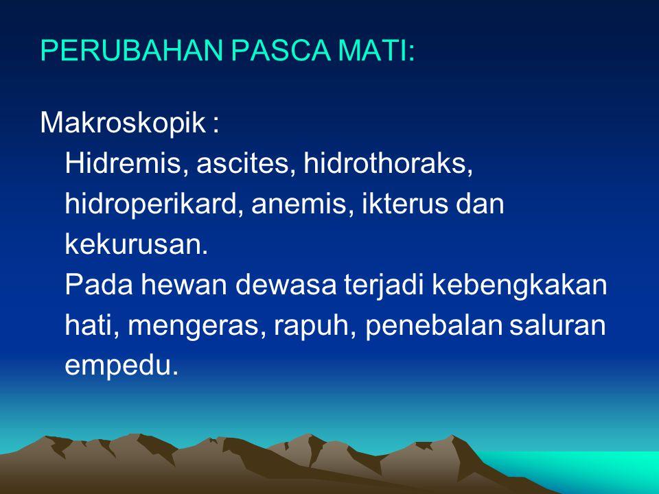PERUBAHAN PASCA MATI: Makroskopik : Hidremis, ascites, hidrothoraks, hidroperikard, anemis, ikterus dan kekurusan. Pada hewan dewasa terjadi kebengkak