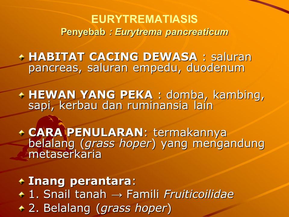 Penyebab : Eurytrema pancreaticum EURYTREMATIASIS Penyebab : Eurytrema pancreaticum HABITAT CACING DEWASA : saluran pancreas, saluran empedu, duodenum