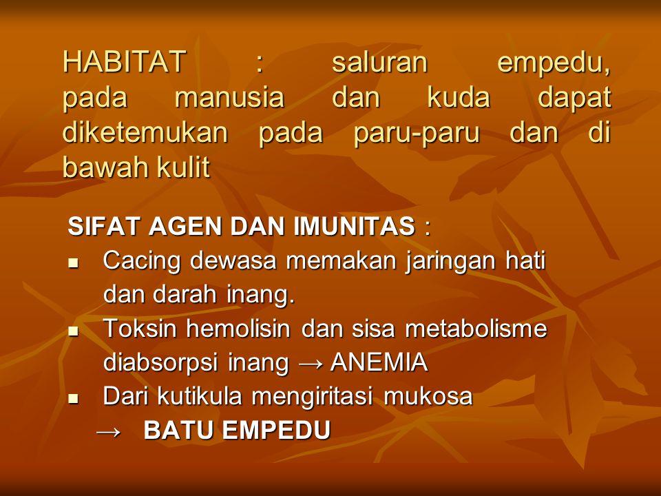 HABITAT : saluran empedu, pada manusia dan kuda dapat diketemukan pada paru-paru dan di bawah kulit SIFAT AGEN DAN IMUNITAS : Cacing dewasa memakan ja