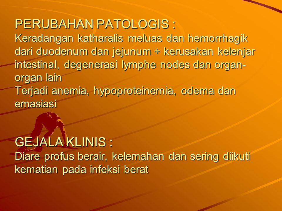PERUBAHAN PATOLOGIS : Keradangan katharalis meluas dan hemorrhagik dari duodenum dan jejunum + kerusakan kelenjar intestinal, degenerasi lymphe nodes