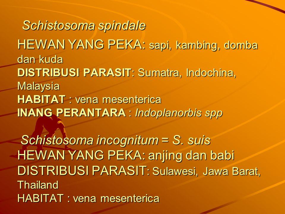 Schistosoma spindale HEWAN YANG PEKA: sapi, kambing, domba dan kuda DISTRIBUSI PARASIT: Sumatra, Indochina, Malaysia HABITAT : vena mesenterica INANG