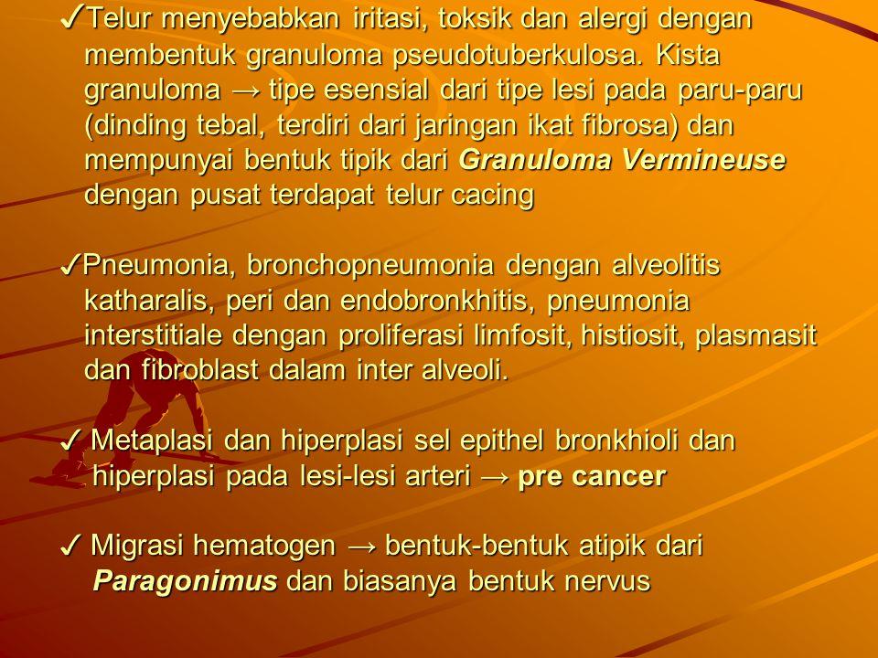 ✓ Telur menyebabkan iritasi, toksik dan alergi dengan membentuk granuloma pseudotuberkulosa. Kista granuloma → tipe esensial dari tipe lesi pada paru-