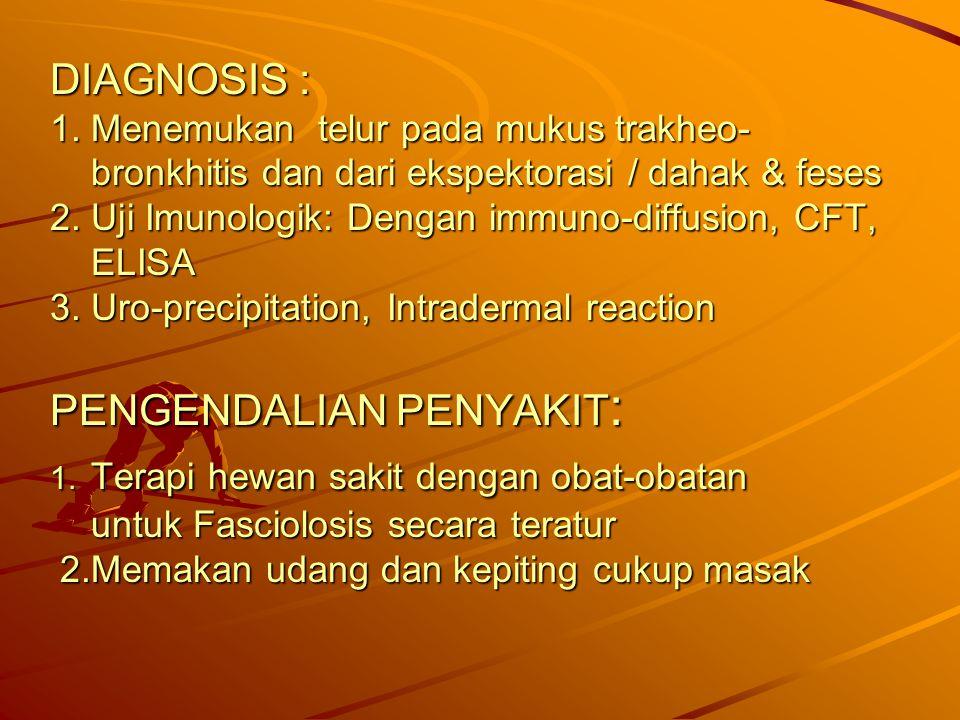 DIAGNOSIS : 1. Menemukan telur pada mukus trakheo- bronkhitis dan dari ekspektorasi / dahak & feses 2. Uji Imunologik: Dengan immuno-diffusion, CFT, E