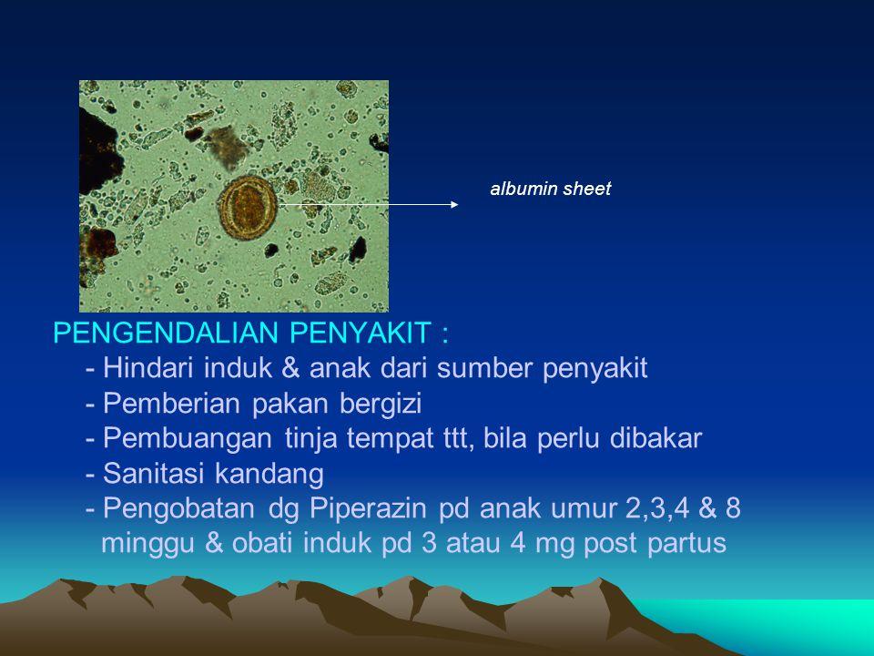 albumin sheet PENGENDALIAN PENYAKIT : - Hindari induk & anak dari sumber penyakit - Pemberian pakan bergizi - Pembuangan tinja tempat ttt, bila perlu