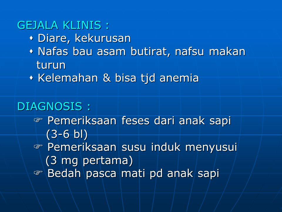 GEJALA KLINIS :  Diare, kekurusan  Nafas bau asam butirat, nafsu makan turun turun  Kelemahan & bisa tjd anemia DIAGNOSIS :  Pemeriksaan feses dar