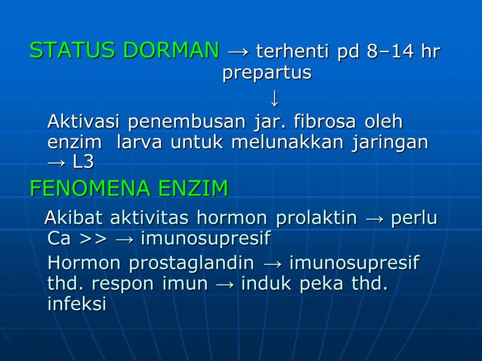 STATUS DORMAN → terhenti pd 8–14 hr prepartus ↓ Aktivasi penembusan jar. fibrosa oleh enzim larva untuk melunakkan jaringan → L3 FENOMENA ENZIM Akibat