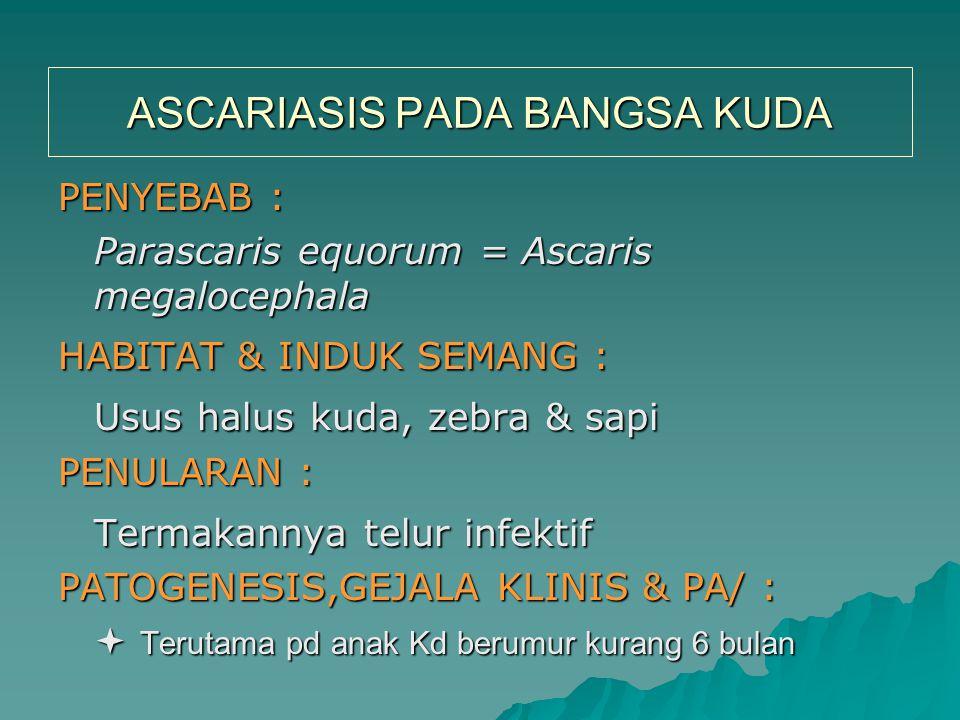 ASCARIASIS PADA BANGSA KUDA PENYEBAB : Parascaris equorum = Ascaris megalocephala HABITAT & INDUK SEMANG : Usus halus kuda, zebra & sapi PENULARAN : T