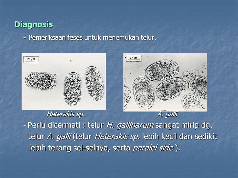 Diagnosis - Pemeriksaan feses untuk menemukan telur. Heterakis sp. A. galli Heterakis sp. A. galli - Perlu dicermati : telur H. gallinarum sangat miri
