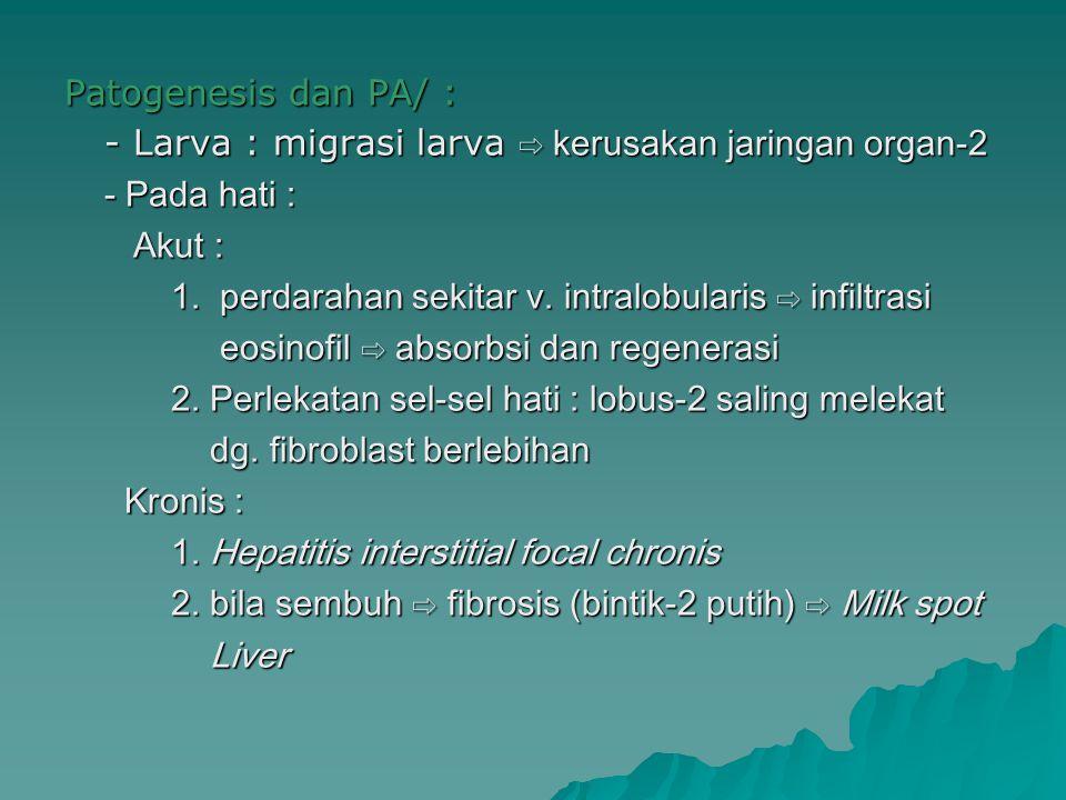 Patogenesis dan PA/ : - Larva : migrasi larva ⇨ kerusakan jaringan organ-2 - Pada hati : Akut : Akut : 1. perdarahan sekitar v. intralobularis ⇨ infil
