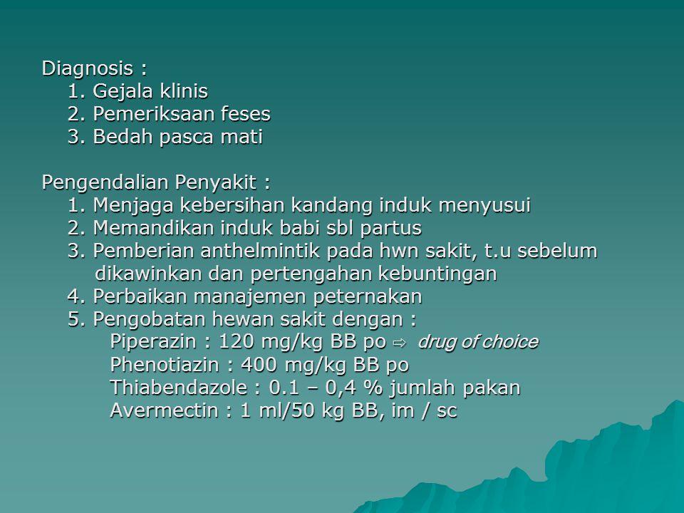 ASCARIASIS PADA BANGSA KUDA PENYEBAB : Parascaris equorum = Ascaris megalocephala HABITAT & INDUK SEMANG : Usus halus kuda, zebra & sapi PENULARAN : Termakannya telur infektif PATOGENESIS,GEJALA KLINIS & PA/ :  Terutama pd anak Kd berumur kurang 6 bulan