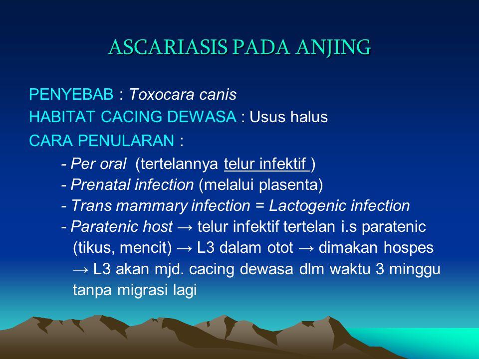 ASCARIASIS PADA ANJING PENYEBAB : Toxocara canis HABITAT CACING DEWASA : Usus halus CARA PENULARAN : - Per oral (tertelannya telur infektif ) - Prenat