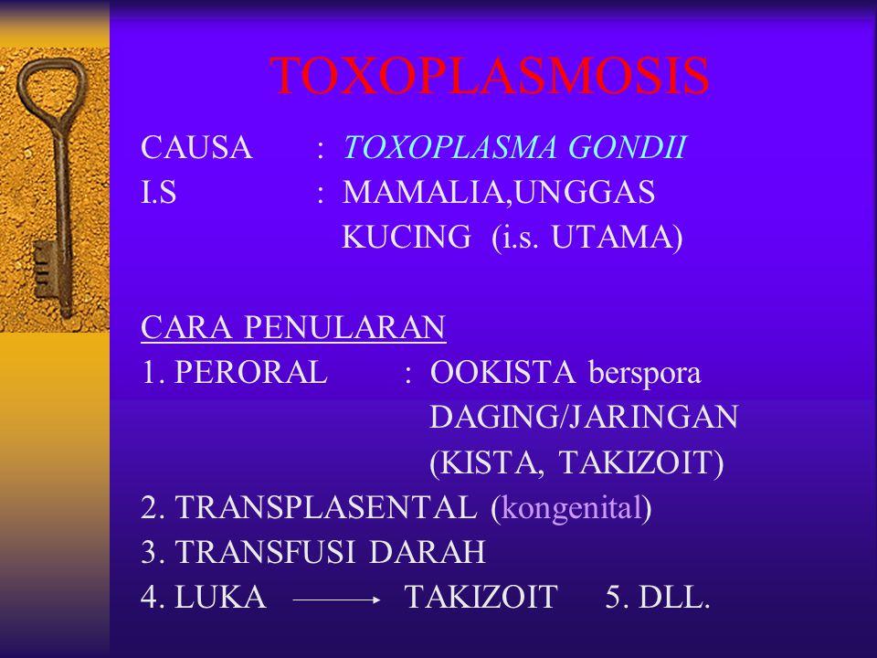 TOXOPLASMOSIS CAUSA: TOXOPLASMA GONDII I.S: MAMALIA,UNGGAS KUCING (i.s. UTAMA) CARA PENULARAN 1. PERORAL: OOKISTA berspora DAGING/JARINGAN (KISTA, TAK