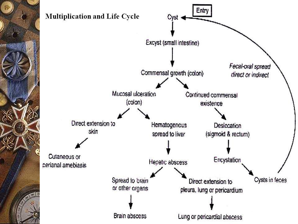 Multiplication and Life Cycle