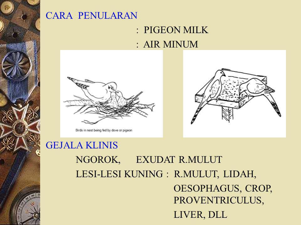 CARA PENULARAN : PIGEON MILK : AIR MINUM GEJALA KLINIS NGOROK, EXUDAT R.MULUT LESI-LESI KUNING : R.MULUT, LIDAH, OESOPHAGUS, CROP, PROVENTRICULUS, LIVER, DLL